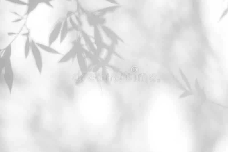 Gray shadow of the leaves on a white wall royalty free stock image