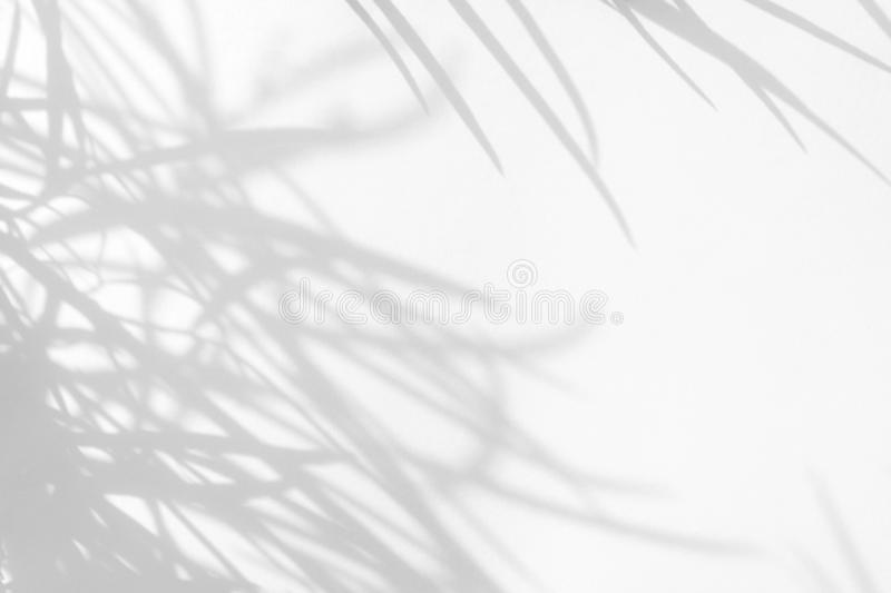 Gray shadows of the delicate grass. On a white wall. Abstract neutral nature concept background. Space for text. Blurred, defocused. Overlay effect for photo stock photography