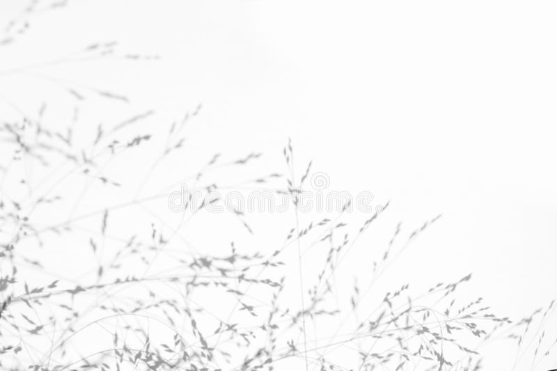 Gray shadows of the delicate grass. Overlay effect for photo. Gray shadows of the delicate grass on a white wall. Abstract neutral nature concept background royalty free stock photos
