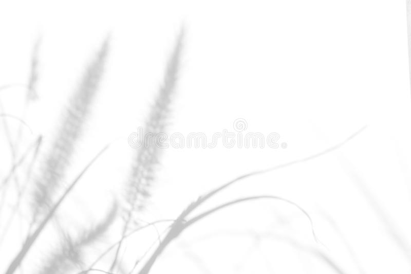 Gray shadows of the delicate grass. Overlay effect for photo. Gray shadows of the delicate grass on a white wall. Abstract neutral nature concept background royalty free stock photo