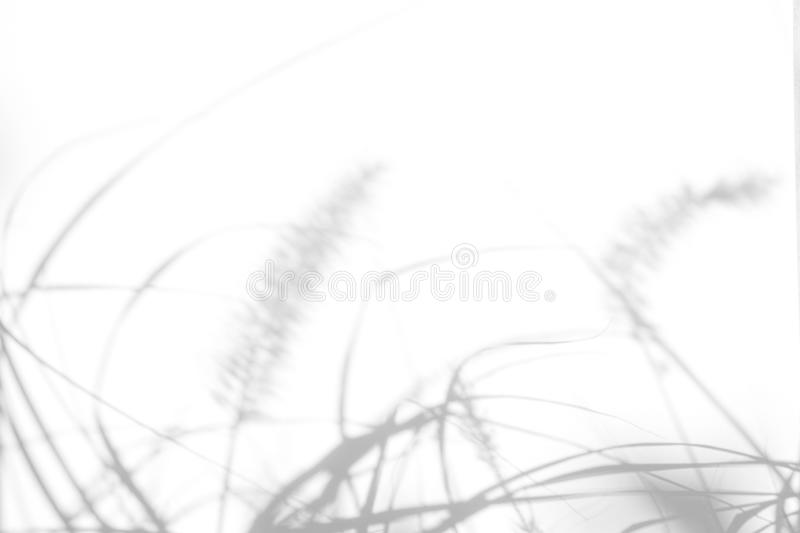 Gray shadows of the delicate grass. Overlay effect for photo. Gray shadows of the delicate grass on a white wall. Abstract neutral nature concept background royalty free stock image