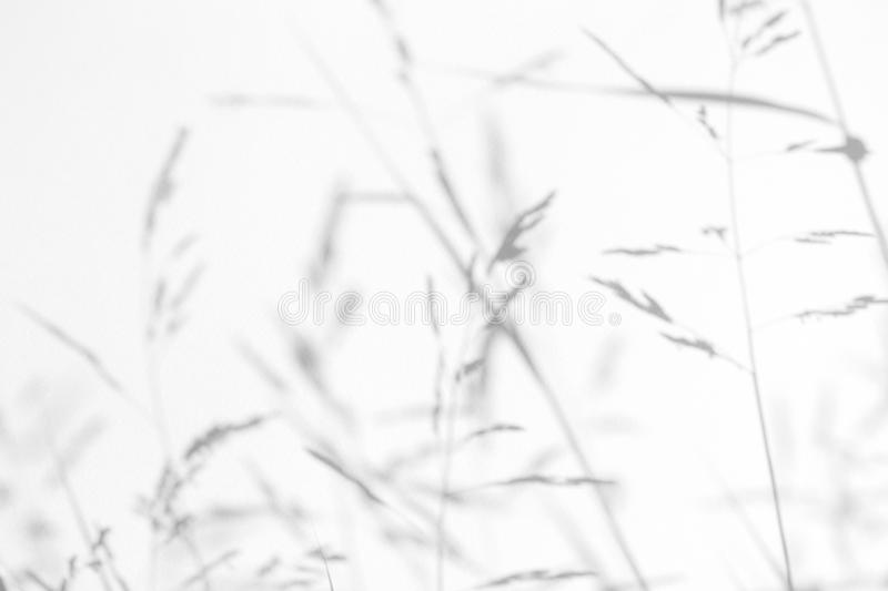 Gray shadows of the delicate grass. On a white wall. Abstract neutral nature concept background. Space for text. Blurred, defocused. Overlay effect for photo royalty free stock photography