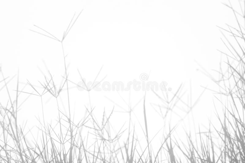 Gray shadows of the delicate grass. On a white wall. Abstract neutral nature concept background. Space for text. Blurred, defocused. Overlay effect for photo stock photo