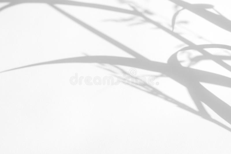 Gray shadows of the delicate grass. On a white wall. Abstract neutral nature concept background. Space for text. Blurred, defocused. Overlay effect for photo stock image