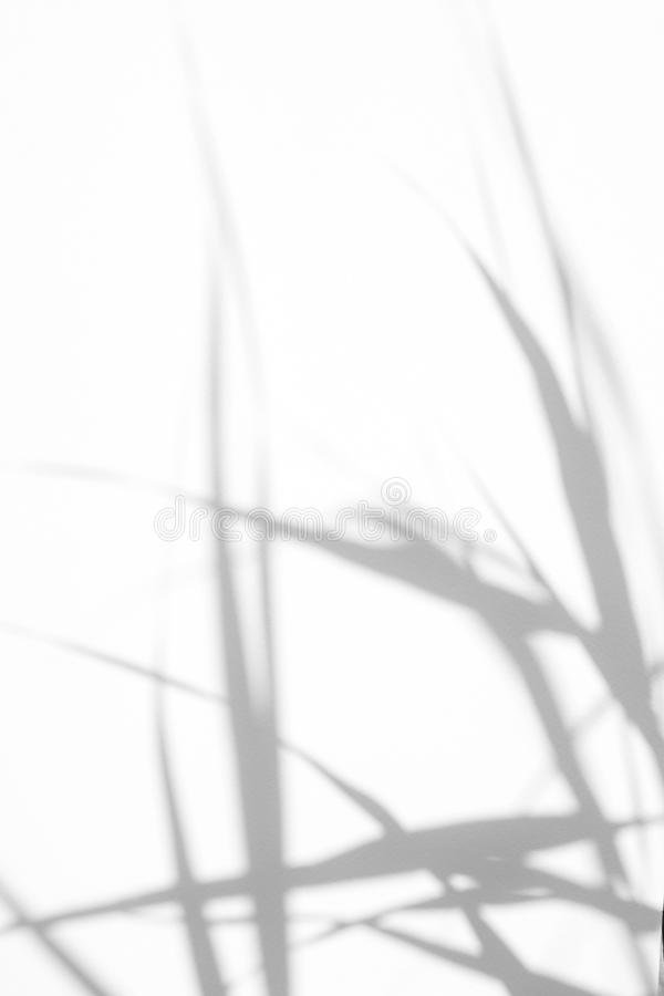 Gray shadows of the delicate grass. On a white wall. Abstract neutral nature concept background. Space for text. Blurred, defocused. Overlay effect for photo royalty free stock image