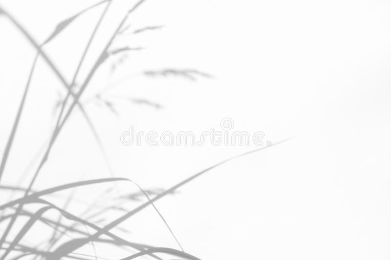 Gray shadows of the delicate grass. On a white wall. Abstract neutral nature concept background. Space for text. Blurred, defocused. Overlay effect for photo royalty free stock photos