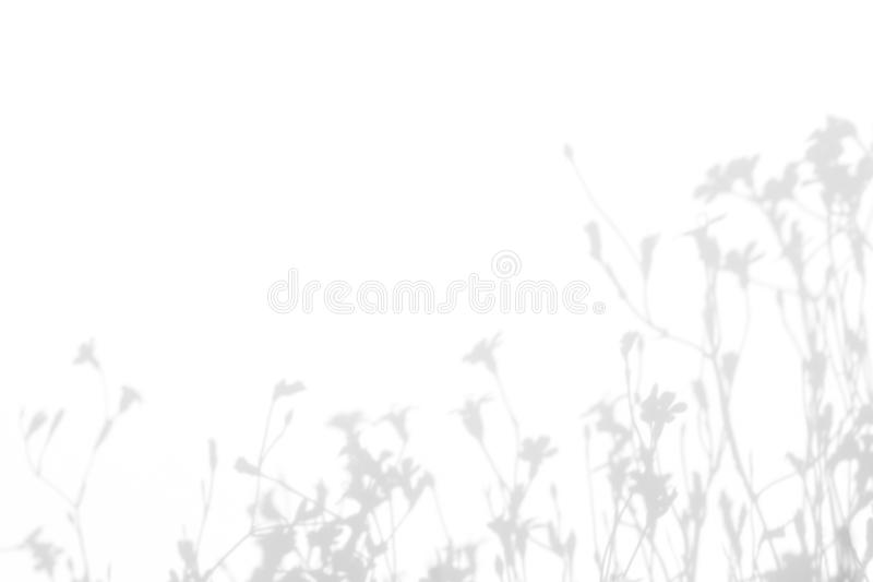 Gray shadows of the flowers and grass. Gray shadows of the flowers and delicate grass on a white wall. Abstract neutral nature concept background. Space for text royalty free stock photos