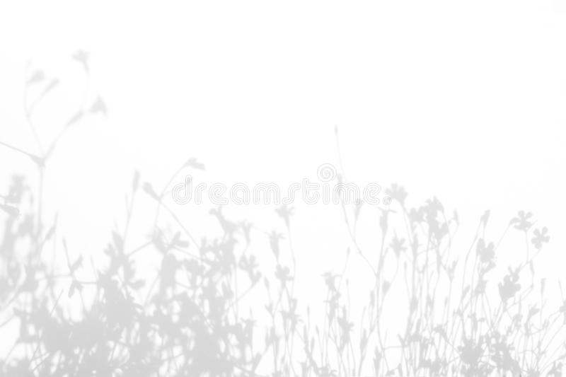 Gray shadows of the flowers and grass. Gray shadows of the flowers and delicate grass on a white wall. Abstract neutral nature concept background. Space for text royalty free stock images