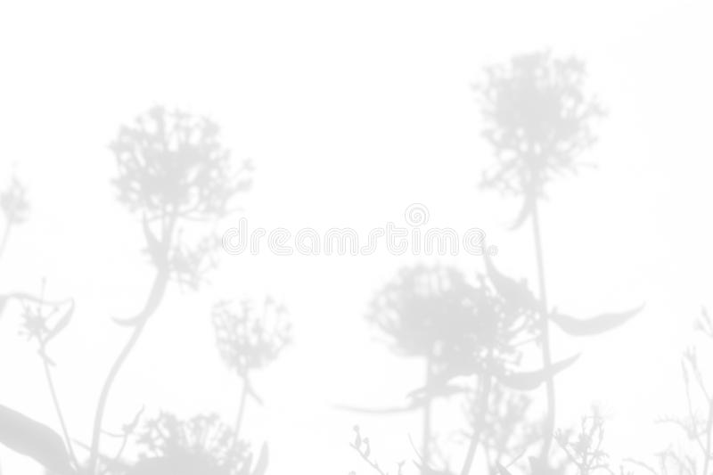 Gray shadows of the flowers and grass. Gray shadows of the flowers and delicate grass on a white wall. Abstract neutral nature concept background. Space for text stock images