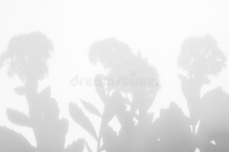 Gray shadows of the flowers and grass. Gray shadows of flowers on a white wall. Abstract neutral nature concept background. Blurred, defocused. Overlay effect royalty free stock image