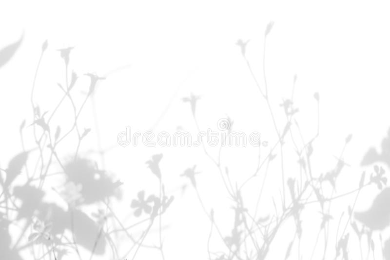 Gray shadows of the flowers and grass. Gray shadows of the flowers on a white wall. Abstract neutral nature concept background. Space for text. Blurred royalty free stock photo