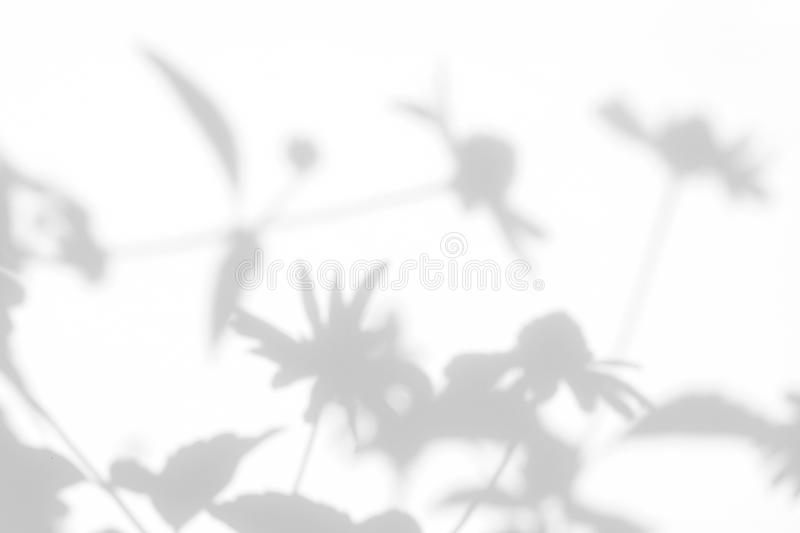Gray shadows of the flowers and grass. Gray shadows of the flowers on a white wall. Abstract neutral nature concept background. Space for text. Blurred royalty free stock photography