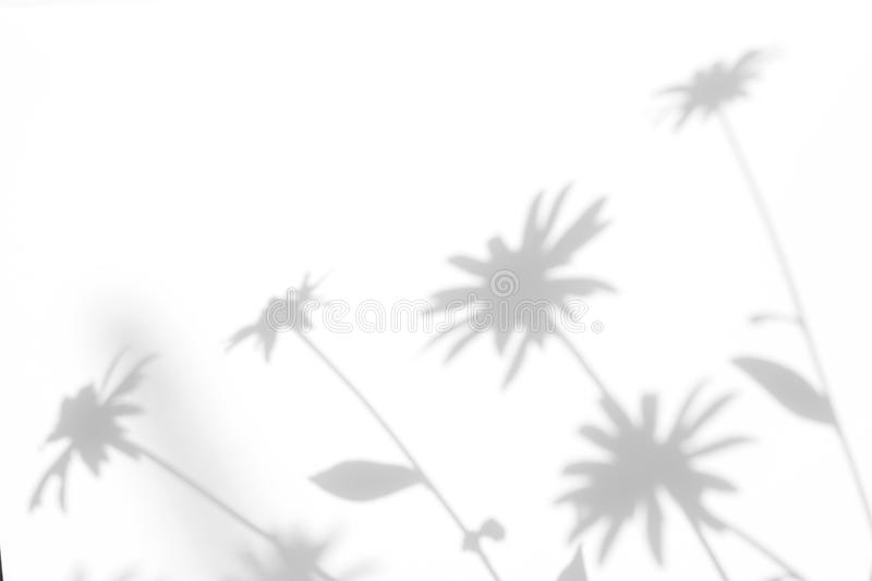 Gray shadows of the flowers and grass. Gray shadows of the flowers on a white wall. Abstract neutral nature concept background. Space for text. Blurred stock images