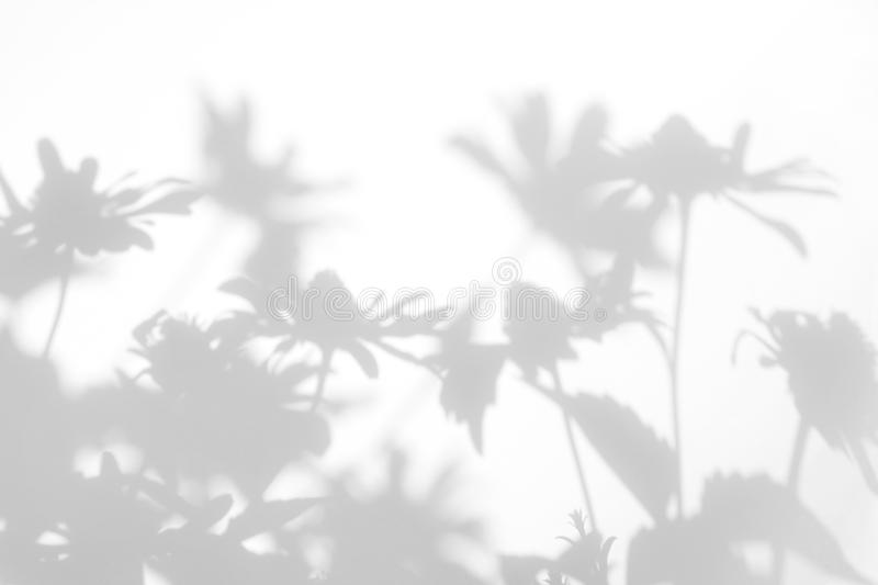 Gray shadows of the flowers. On a white wall. Abstract neutral nature concept background. Space for text. Blurred, defocused, grass, leaf, plant, leaves, light stock photography