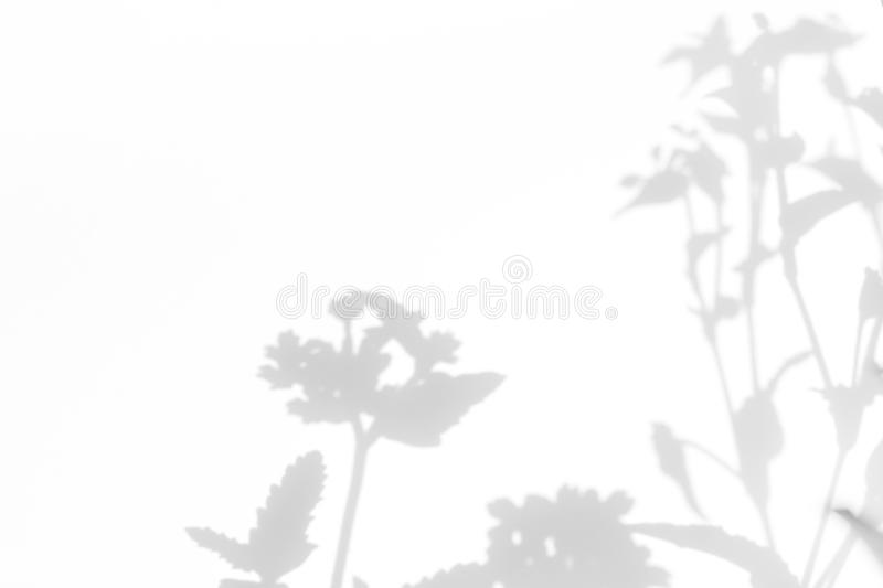 Gray shadows of the flowers. On a white wall. Abstract neutral nature concept background. Space for text. Blurred, defocused, grass, leaf, plant, leaves, light stock photo