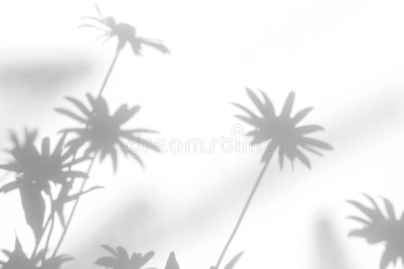 Gray shadows of the flowers. On a white wall. Abstract neutral nature concept background. Space for text. Blurred, defocused, grass, leaf, plant, leaves, light stock image