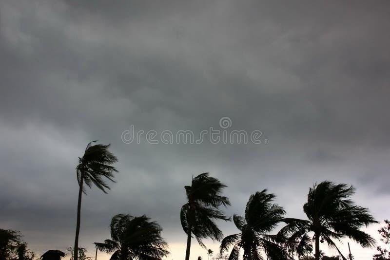 gray sky before typhoon or hurrican or tonado  big storm come.rain storm impact coconut royalty free stock image
