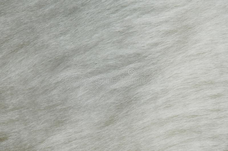 Gray soft texture background. Close up. Cat fur pattern stock photo