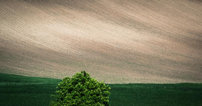 Gray spring field abstract background royalty free stock photo