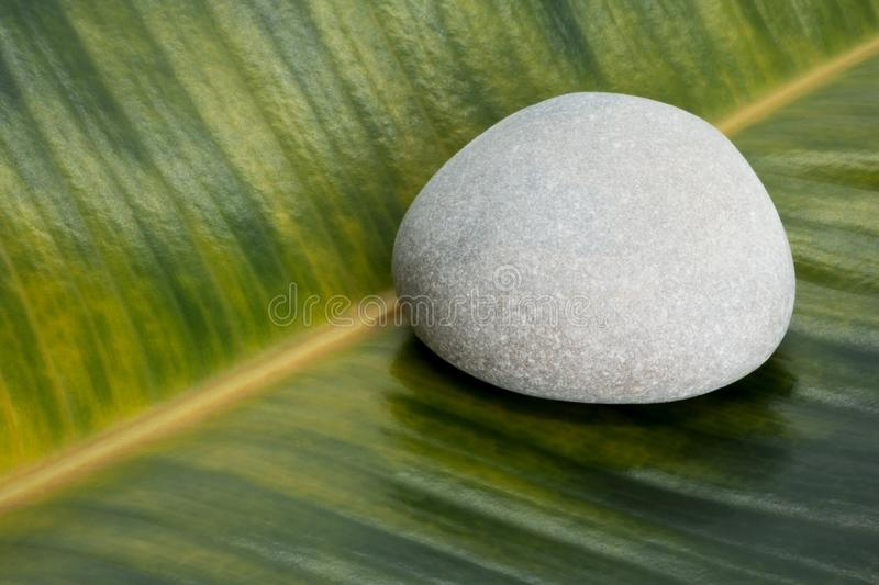 Gray stone on ficus leaf background stock photos