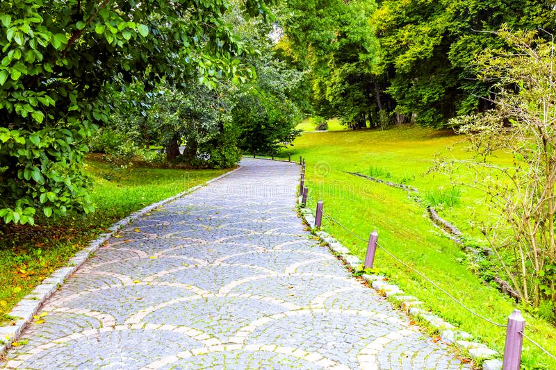 A gray stone path with ornament in the forest royalty free stock photo