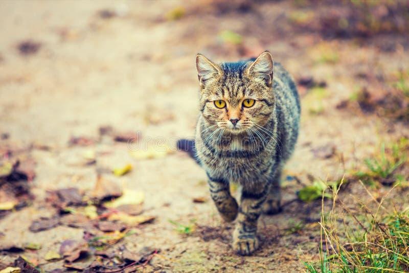 Kitten walking on dirt road royalty free stock photo
