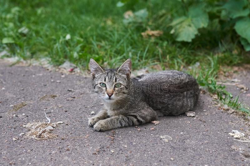 Gray-striped homeless cat lying on the street on the asphalt. For any purpose stock photography