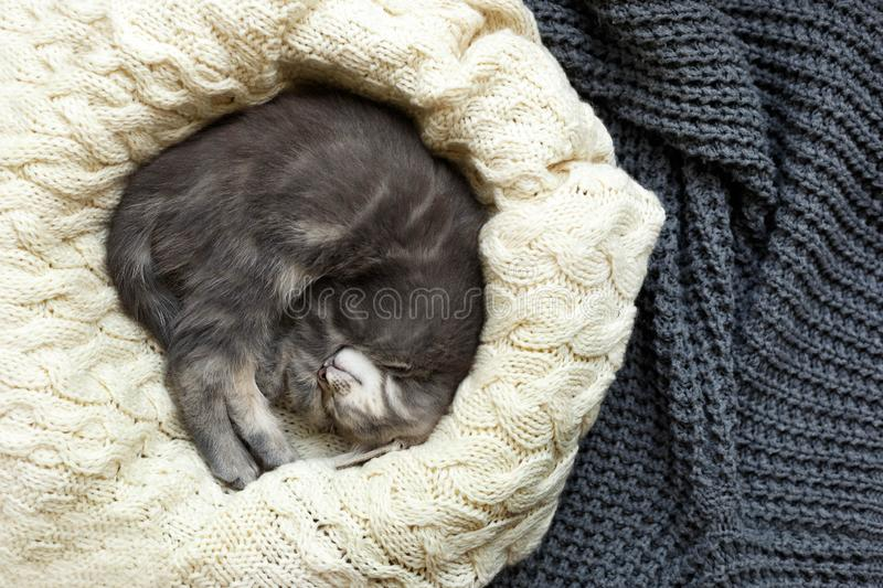 Gray striped kitty sleeps on knitted woolen beige plaid. Little cute fluffy cat. Cozy home.  stock photography