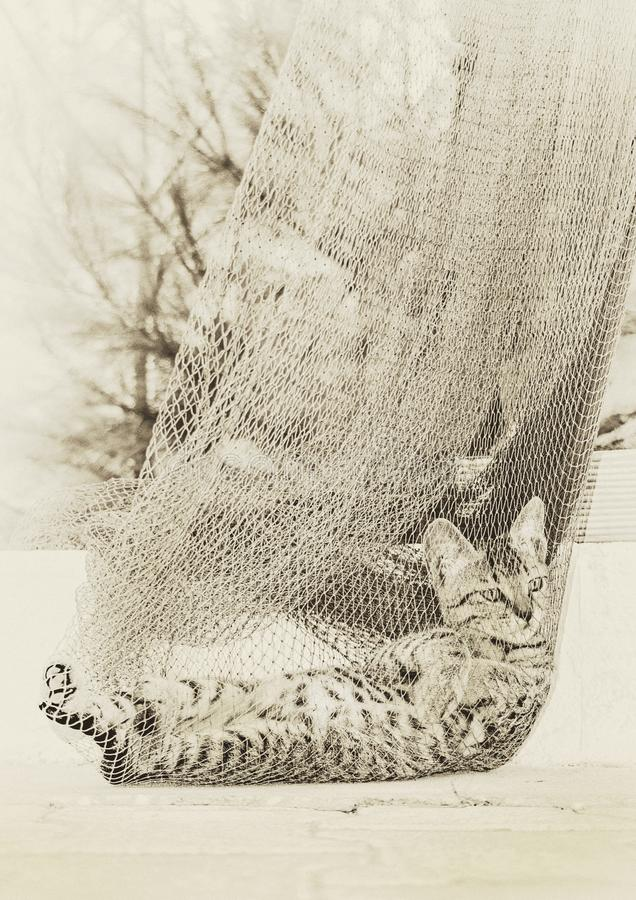 Gray Tabby Cat auf grauem Netz lizenzfreies stockbild