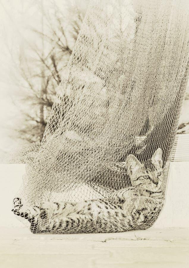 Gray Tabby Cat en Grey Net imagen de archivo libre de regalías