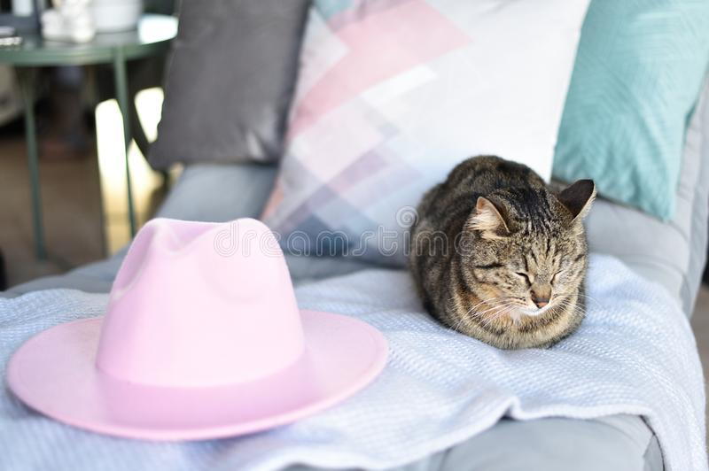 Gray tabby cat and a pink hat. Light airy mood of relaxation and travel stock image
