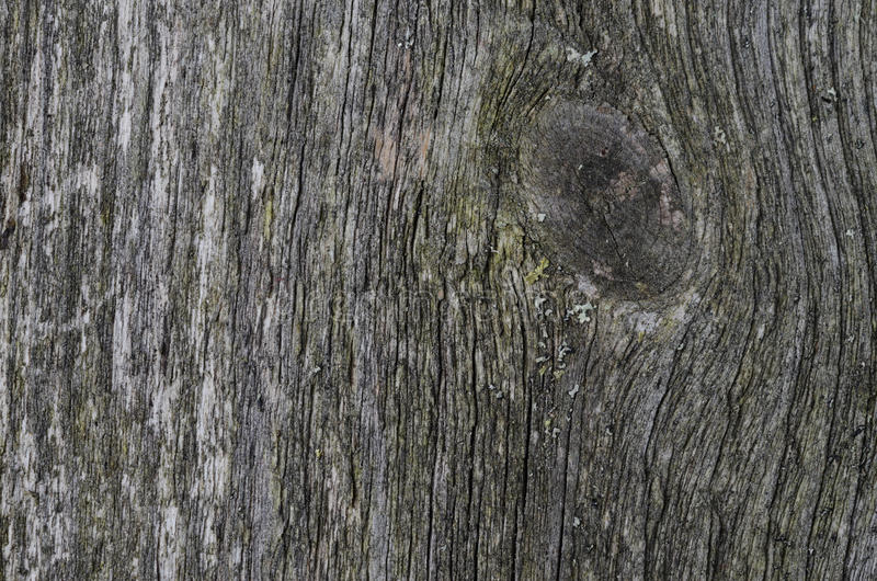 Gray Texture Of Old Wood Stock Photography