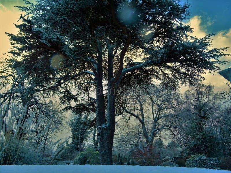 Gray Trees Under Winter stock photo