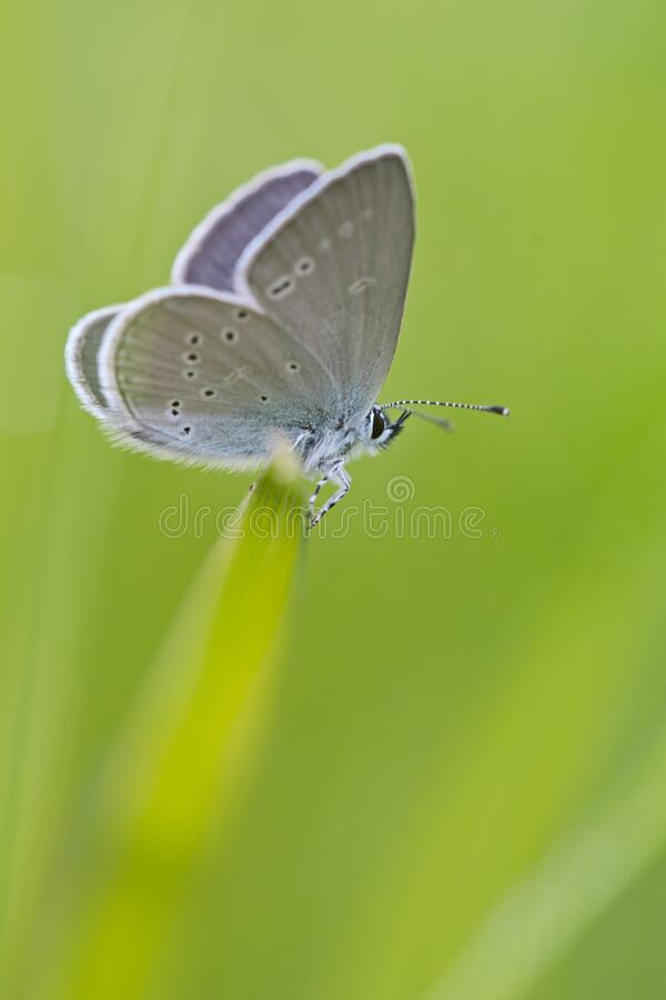 Gray White Moth Perched On Green Grass Free Public Domain Cc0 Image