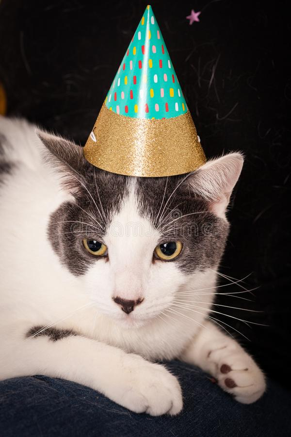 Gray and white pet cat wearing a pointed party hat royalty free stock images