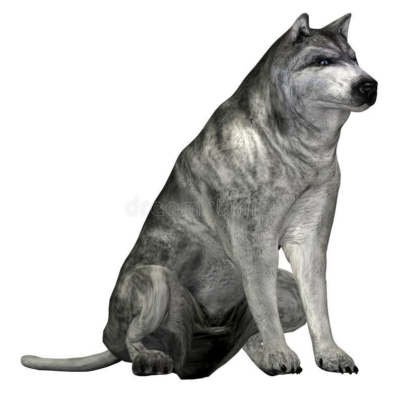 Gray Wolf royalty free illustration