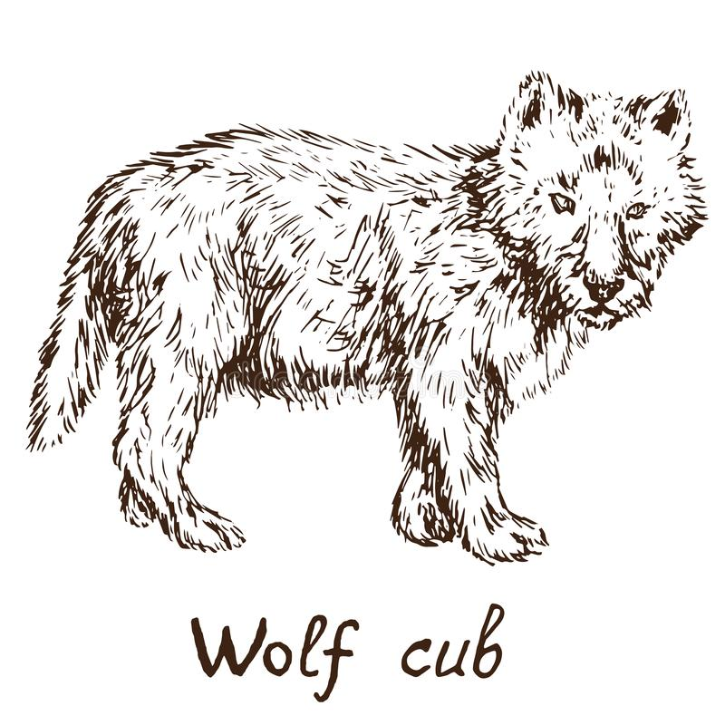 Gray Wolf timber wolf or western wolf cub, hand drawn doodle. Simple drawing vector illustration with inscription stock illustration
