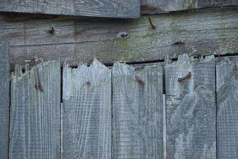 Gray wooden texture from old broken boards. In the fence wall royalty free stock images