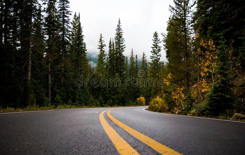Gray and Yellow Road Between Forest stock images