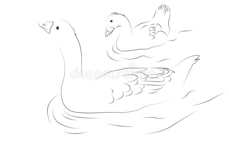 Graylag Geese as line drawing stock image