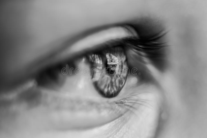 Grayscale Macro Photography of Person's Eye royalty free stock image