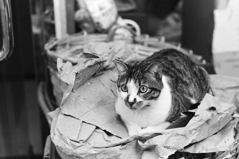 Grayscale Photo Of Tabby Cat stock photos