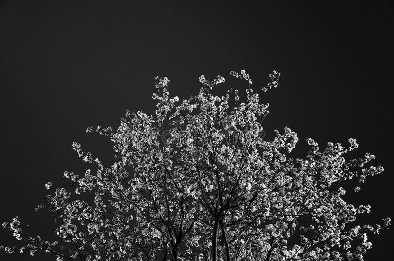 Grayscale Photo Of Trees Free Public Domain Cc0 Image