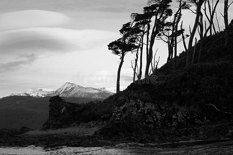 Grayscale Photo of Trees Near Body of Water royalty free stock images