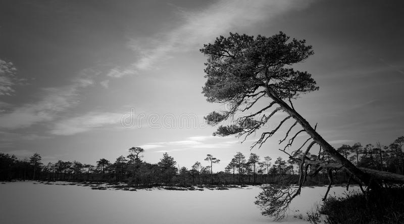 Grayscale Photo of Trees Near Body of Water stock photos