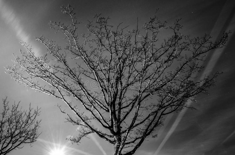 Grayscale Photography of Bare Tree stock photography