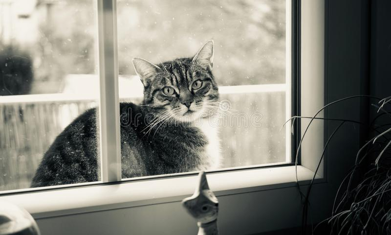 Grayscale Photography of Cat Outside Glass Sliding Window stock image