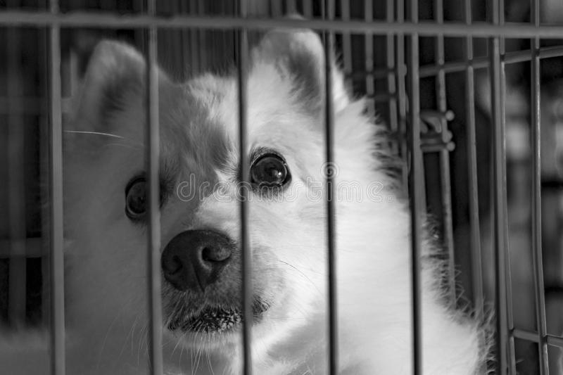 Grayscale Photography Of Dog In Cage Free Public Domain Cc0 Image