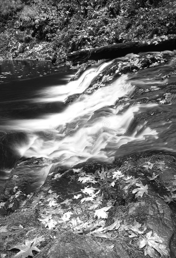 Grayscale Photography of Falling Leaves Near Running Water royalty free stock images
