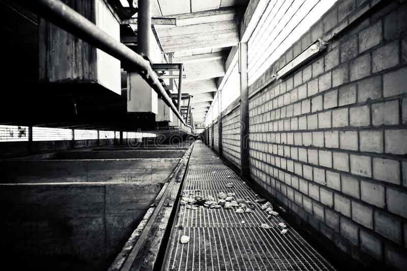 Grayscale Photography Of A Pathway Free Public Domain Cc0 Image
